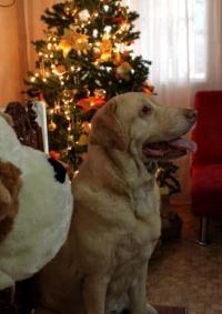 christmas2013_15
